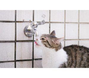 Les meilleures alternatives pour filtrer l'eau du robinet