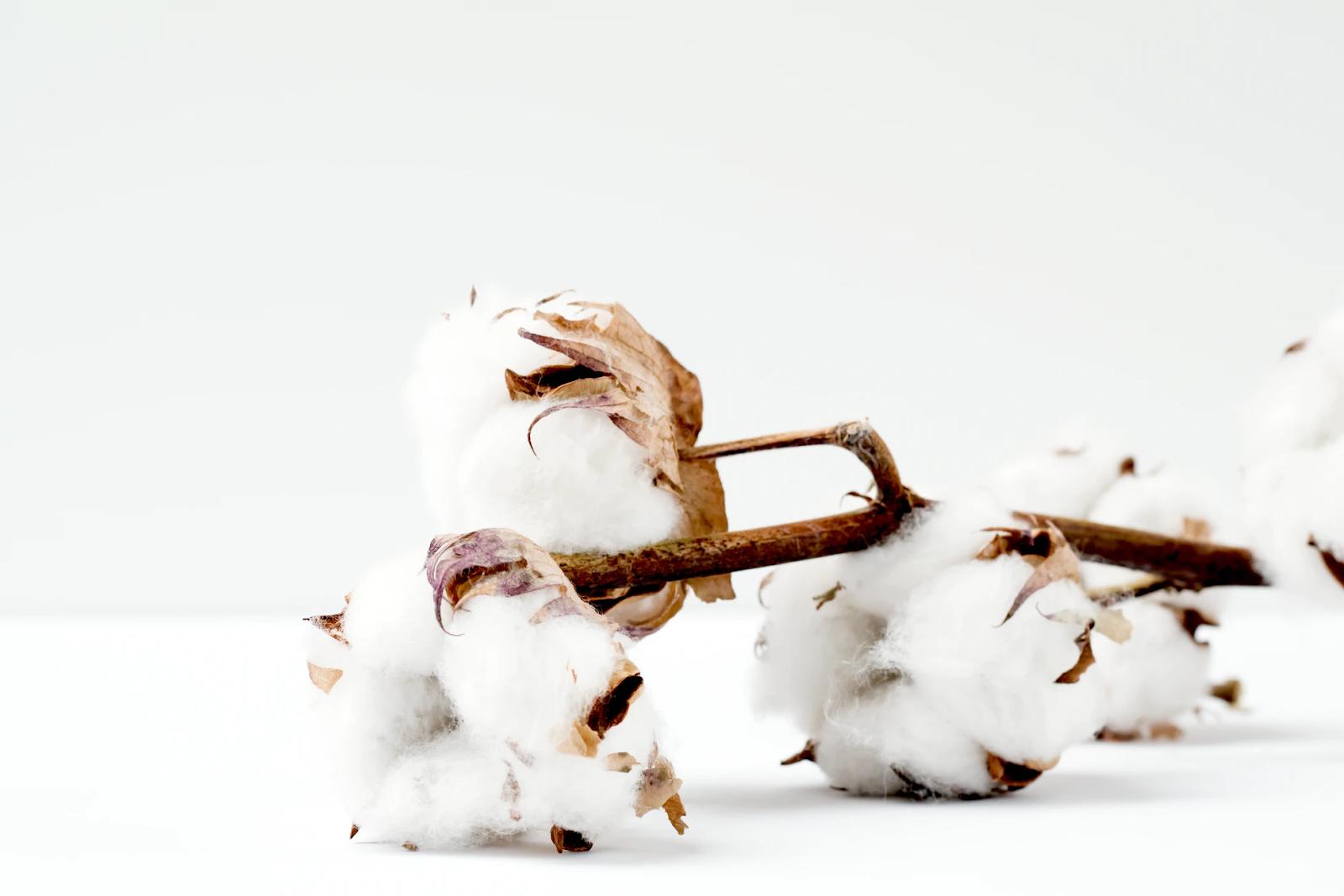 Impact de la culture du coton sur l'environnement